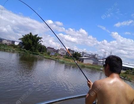 周末野河,水庫,魚塘三連戰 自制餌料釣羅非魚