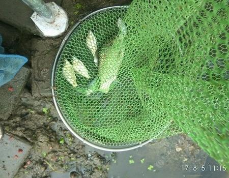 周末出游,這三伏天實在是太熱了。 化氏餌料釣鯽魚