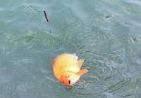 防止跑鱼、钓鱼脱钩可尝试这些方法