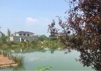 年画村荷花池