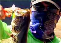《鱼资渔味》20170822 廖新林福建龙岩猎斑鳜