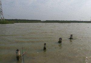 东北流野生鱼钓场