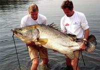 盘点那些钓上来的比人还大的鱼