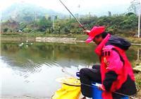 《垂钓对象鱼视频》钓友冬季野糖钓鲫 渔获满满