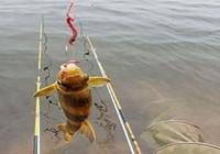 黄颡鱼钓了二十年 这绝招一试就灵 现在用它最合适